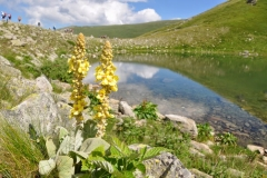 pelister-national-park_2